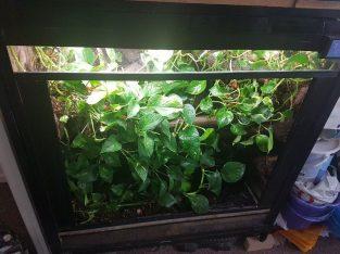 Live planted glass vivarium, large