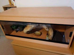 Large Reptile vivarium set up